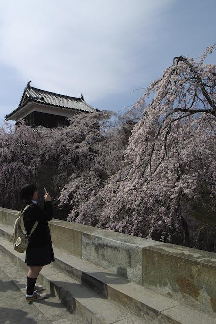 #003 ケータイで桜