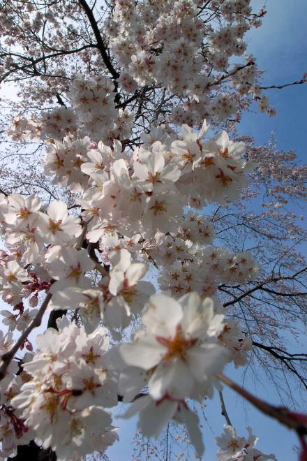 #001 千本桜