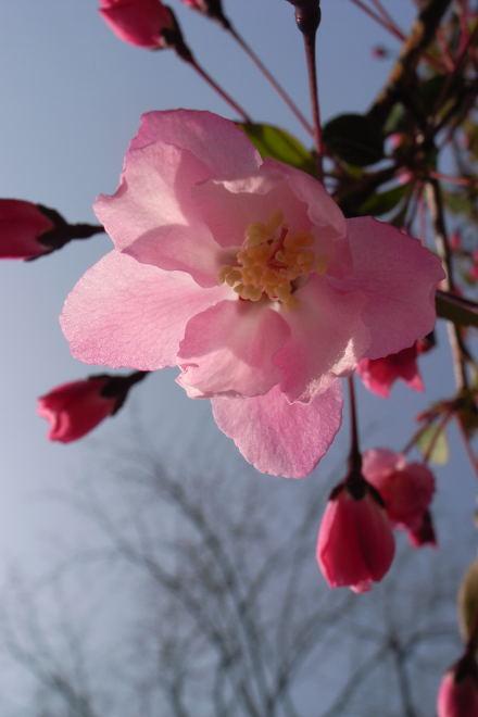 #003 ピンクの花