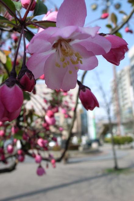 #004 朝の花