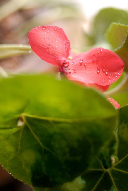 #004 花びら