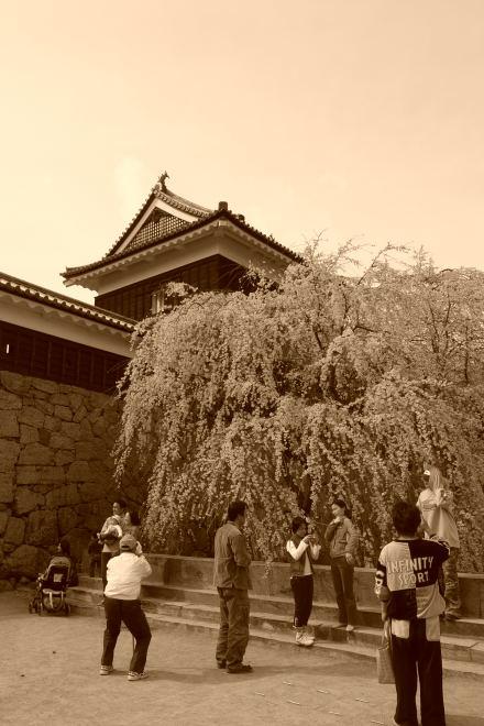#003 上田城のサクラ