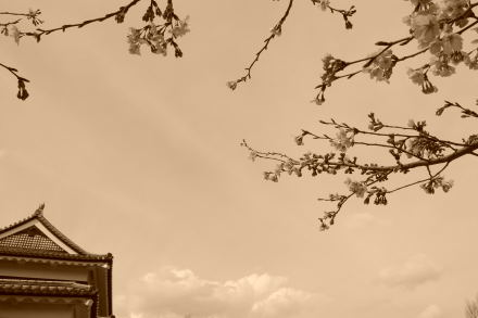#004 上田城のサクラ