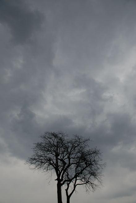 #001 黒樹