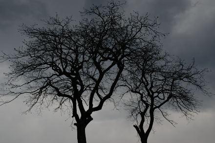 #002 黒樹