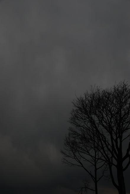 #003 黒樹