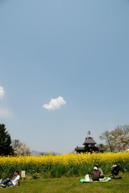 #004 菜の花の前で一休み