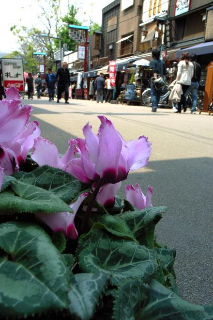 #001 道ばたに咲く花