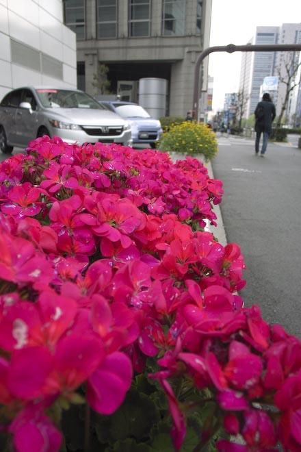 #001 クルマと花と赤