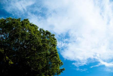 #006 谷中の空