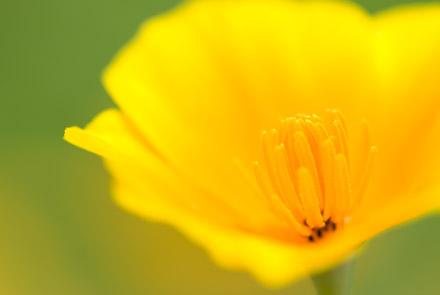 #001 黄花の世界