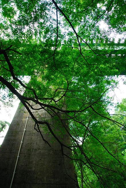 #001 吐竜の滝 2007
