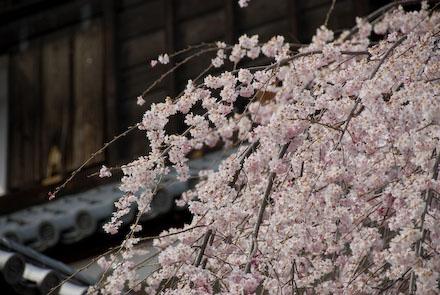 #001 春の上田城