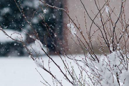 #001 大雪