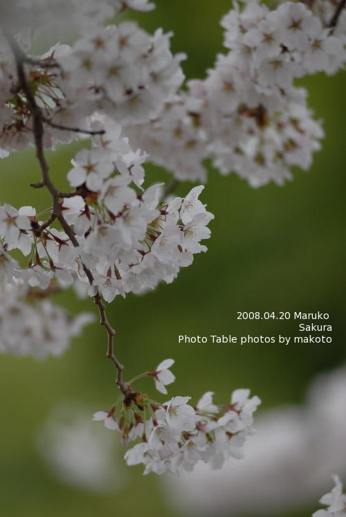 #002 桜