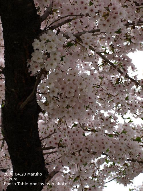 #001 桜
