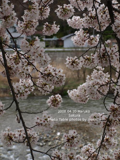 #003 桜