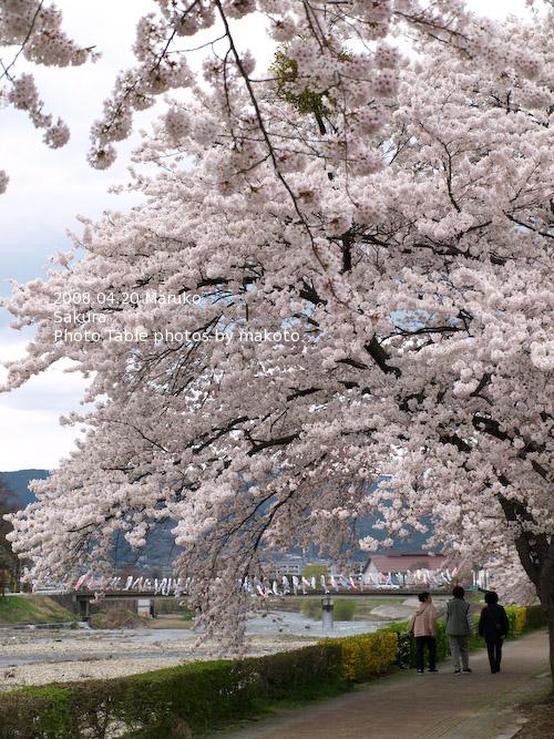 #006 桜