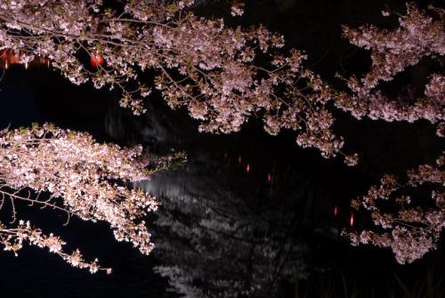 #004 夜桜