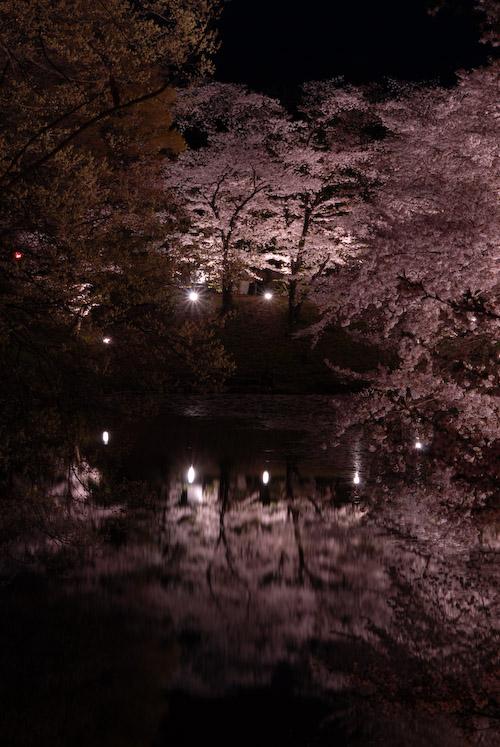 #005 夜桜