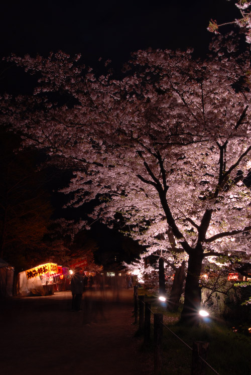 #007 夜桜
