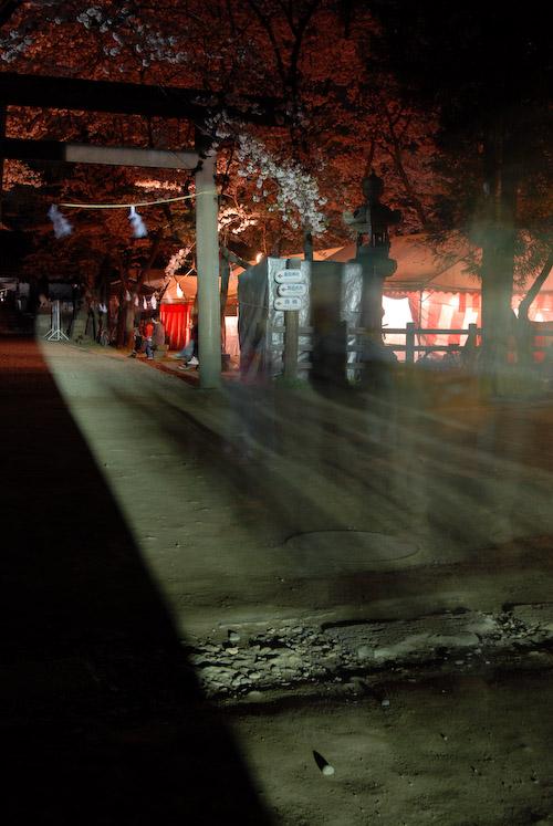 #006 夜桜