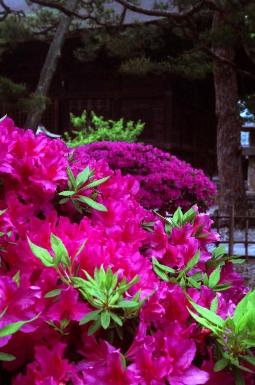 #003 M6 FLOWER