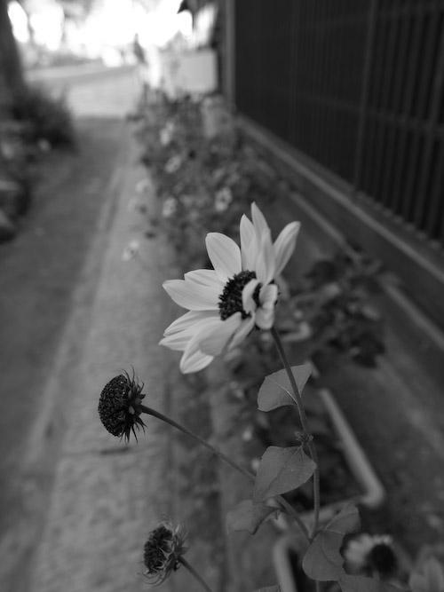#003 MONO FLOWER