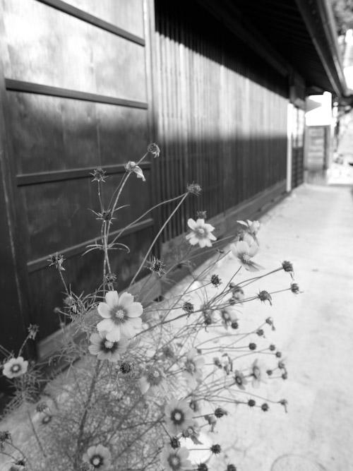 #004 MONO FLOWER
