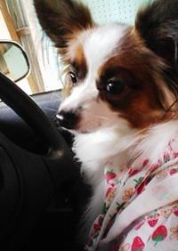 ドライブ??