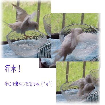 gyouzui-1.jpg