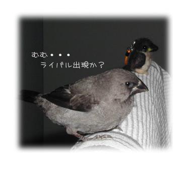 jyuusimatu-1.jpg