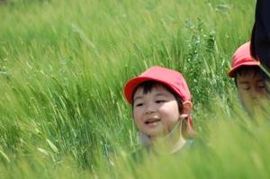 麦畑ときり