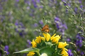 ひまわりと蝶 ブログ