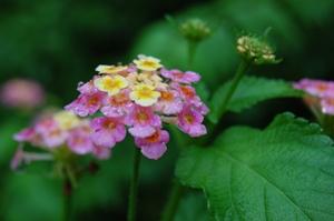 ピンクの花 ブログ