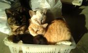 朝の子猫たち