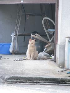 番猫チャッチャ