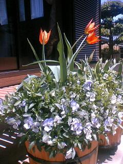 20060420バレリーナ