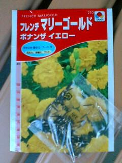 フレンチマリーゴールド・種