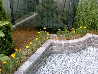 花壇ふちどりマリーゴールド