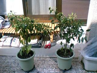 左:花子・右:太郎