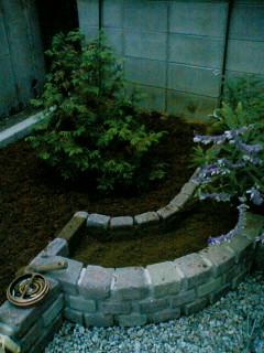 チューリップ植え付け場所