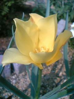 咲いた花アップ