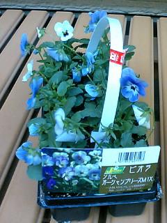 10個で399円