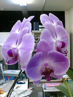 ミディ7つ目のお花