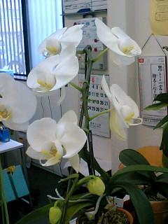 6/206花目開花