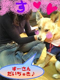 sukisukisu-