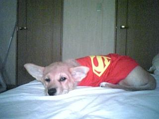 スーパーマン?