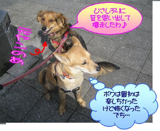 なに思い出してんだよぉ(゛ `-´)/ コラッ!!