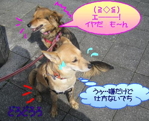 ざけんなよ!!!ノア!!!